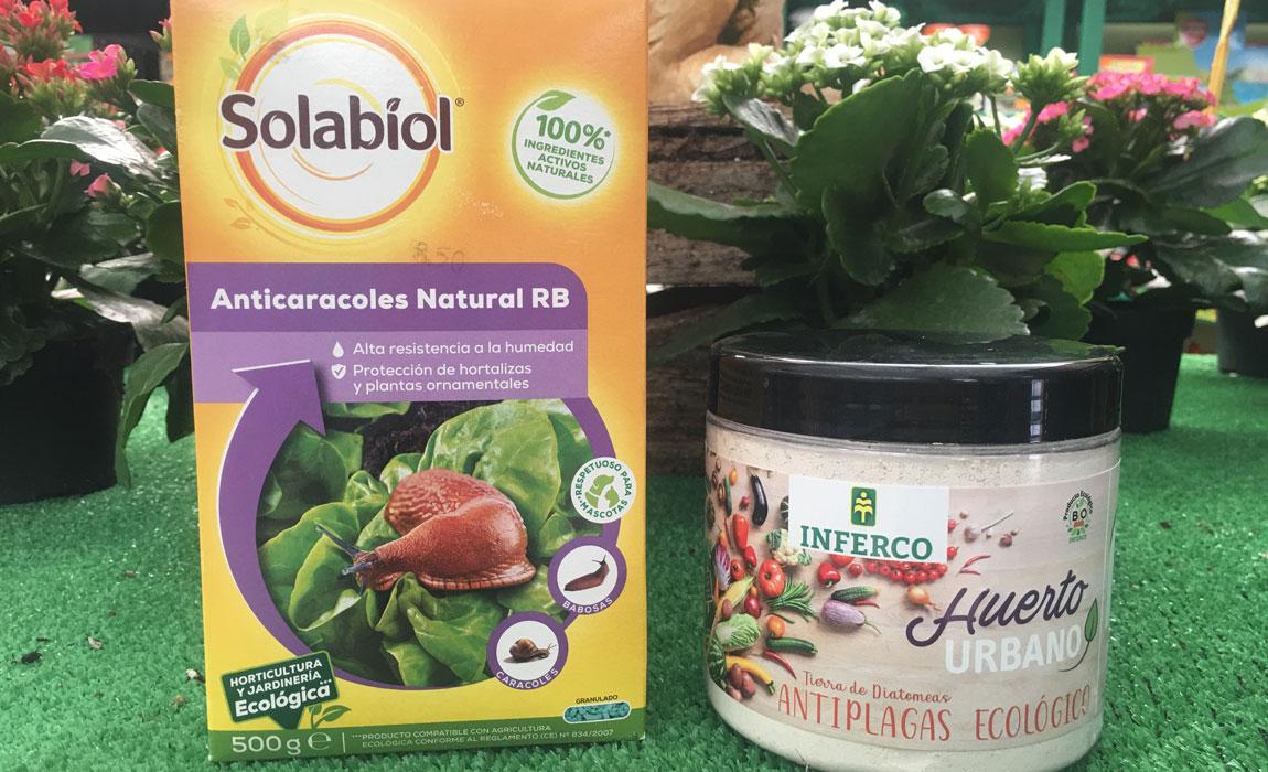 Cómo tener las plantas sanas