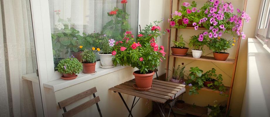 Plantas en balcón
