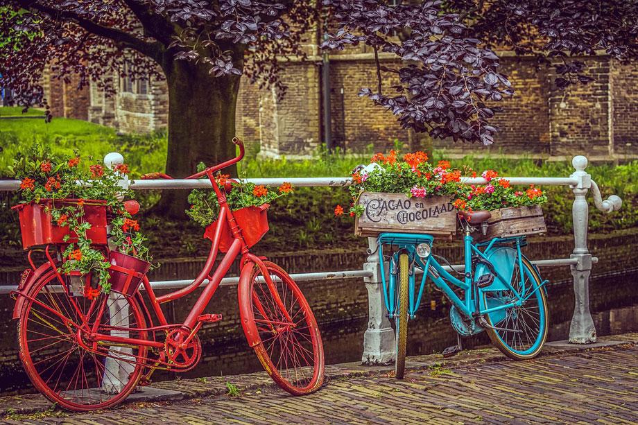 Geranios decorando bicicletas viejas