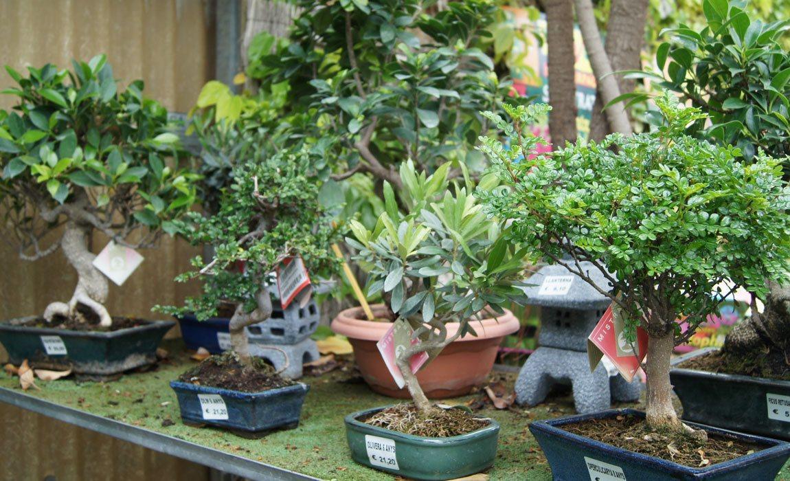 Sustrato para bonsais
