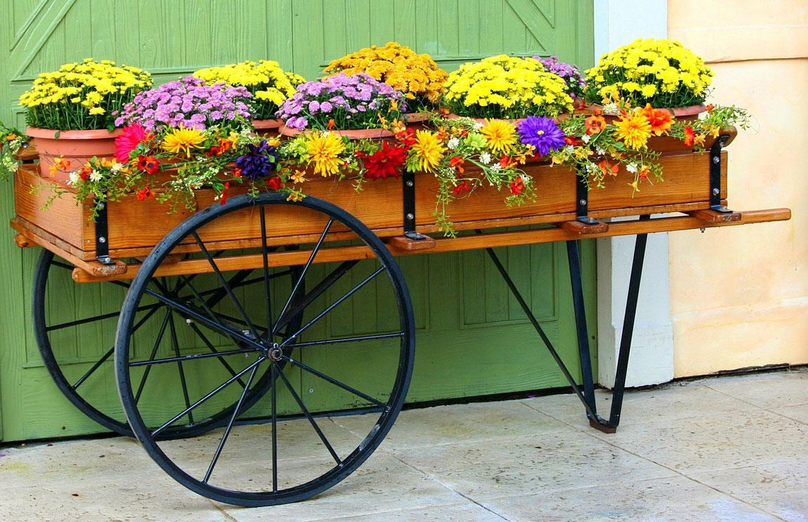 Carro de crisantemos