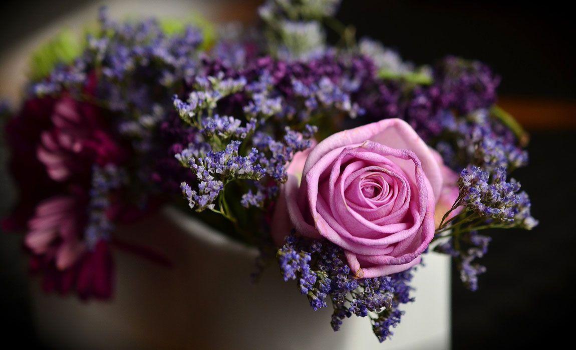 Flores y Plantas en el Día de los Enamorados