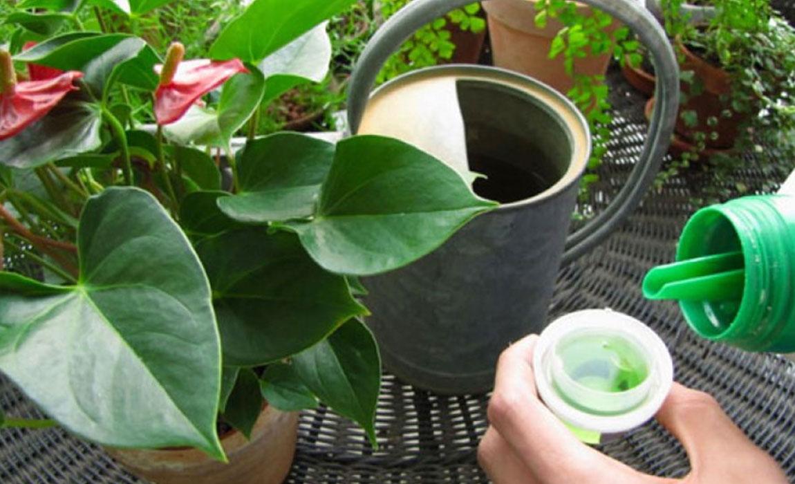 Abonar las plantas