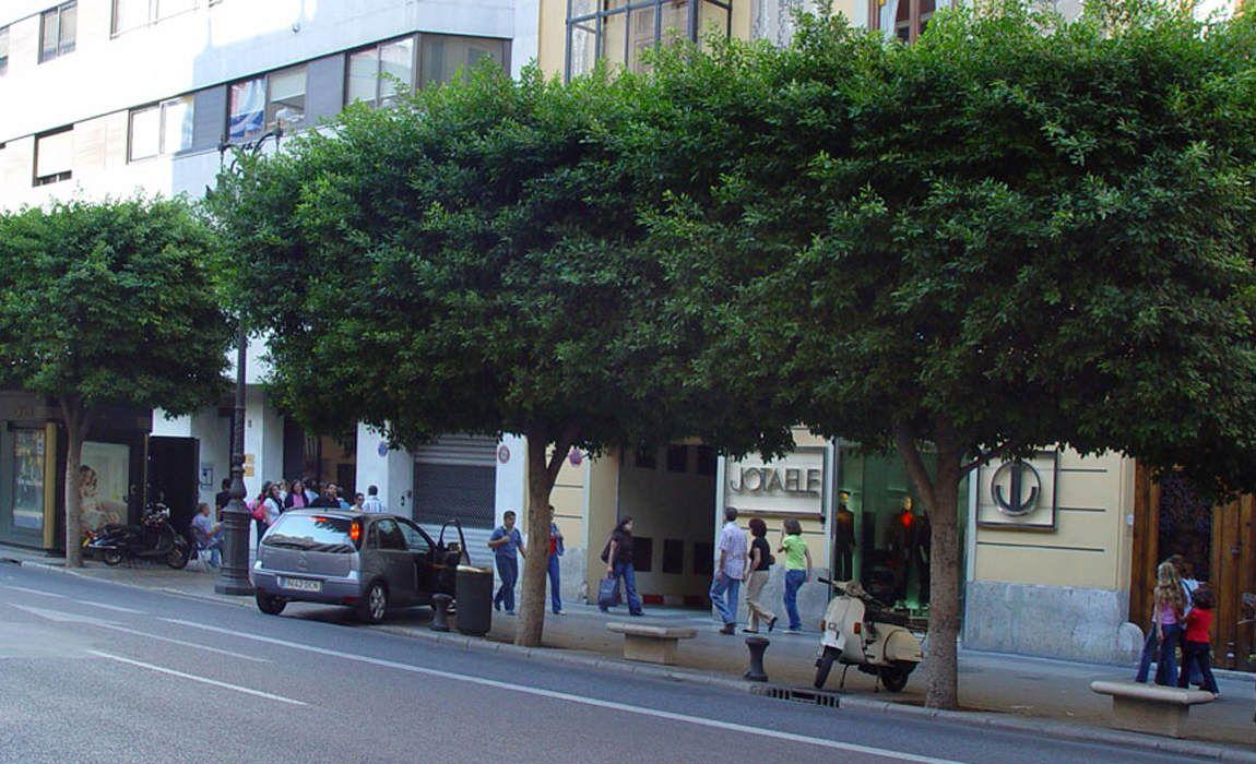 Colección de Ficus