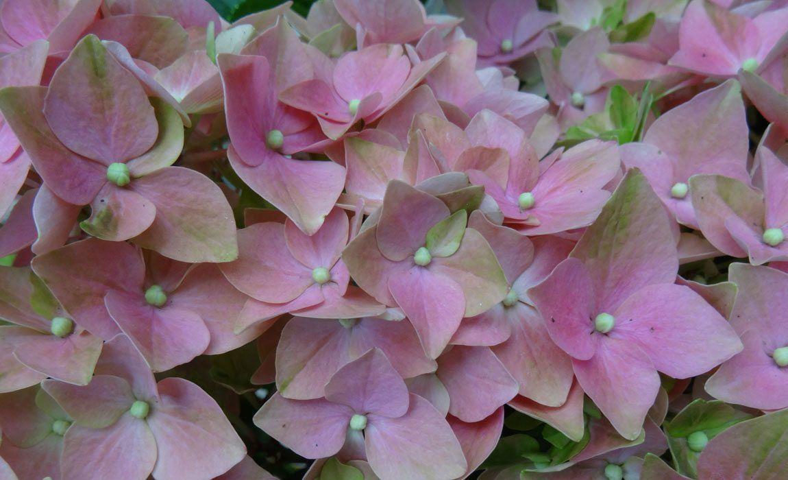 Sustrato especial para plantas acidófilas