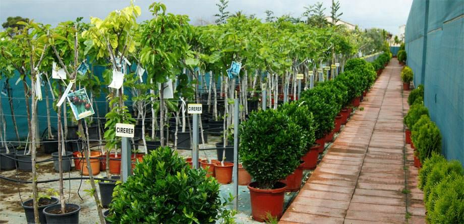 Sección de Frutales en Albogarden
