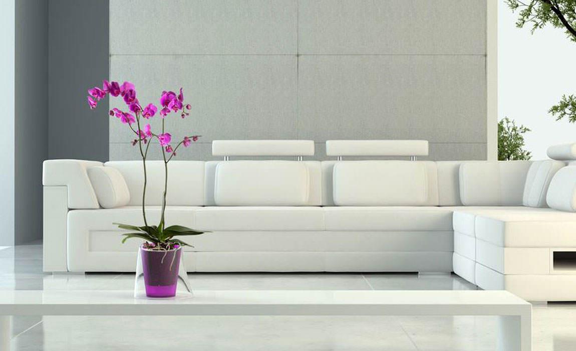 Modelo Lina de Hobby Flower, ideal para orquídeas