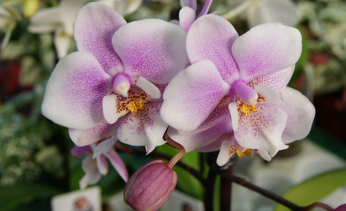 Orquídeas en Valencia