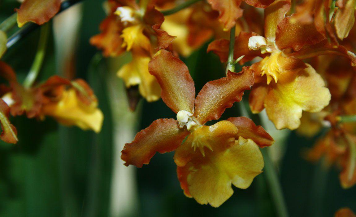 Sustrato especial para orquídeas