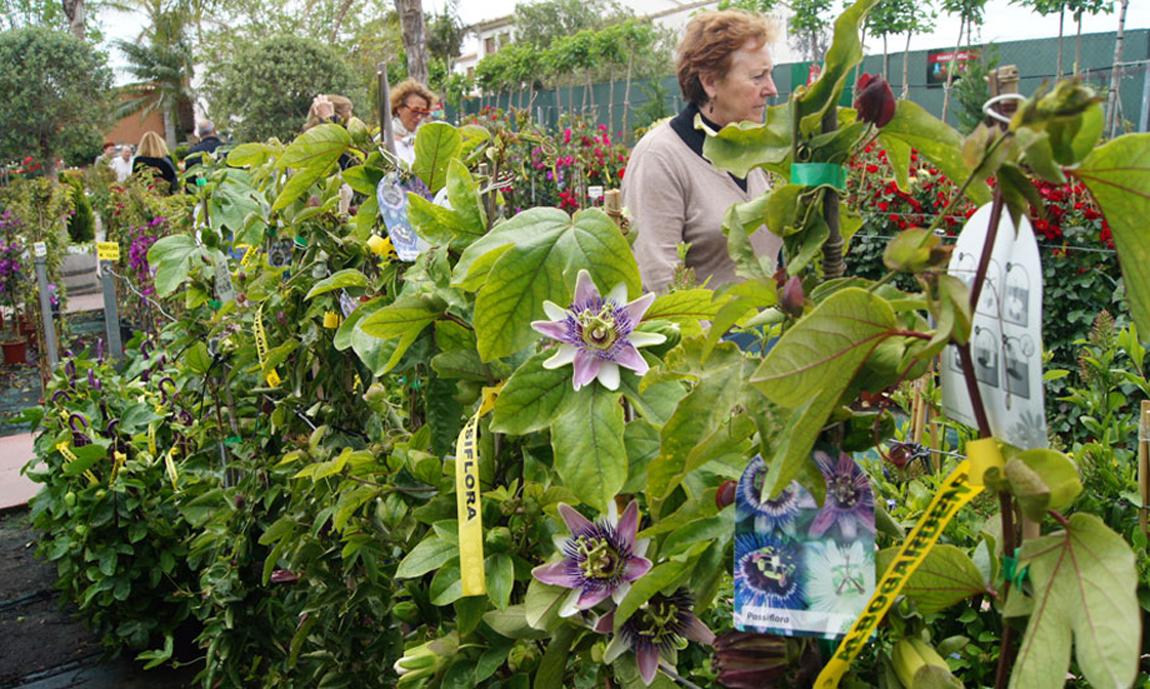 Passifloras en Albogarden