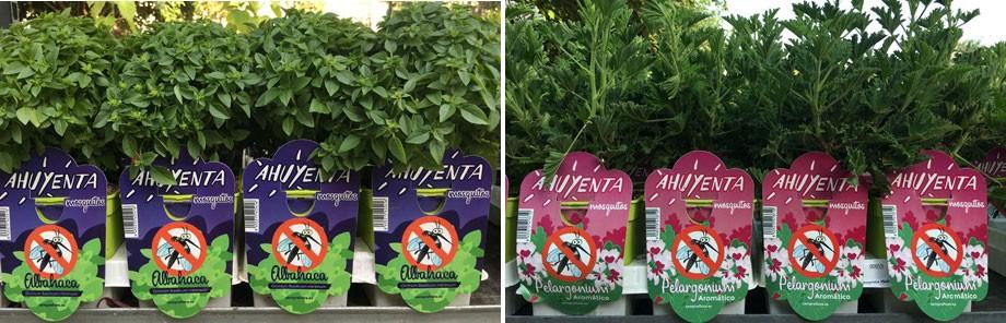 Planta antimosquitos en Albogarden