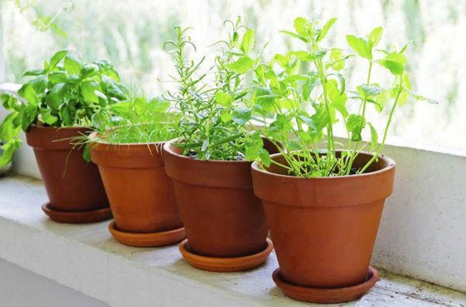 Plantas aromáticas en la cocina