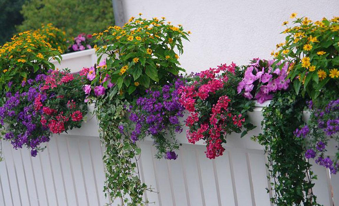 Más felices con flores y plantas