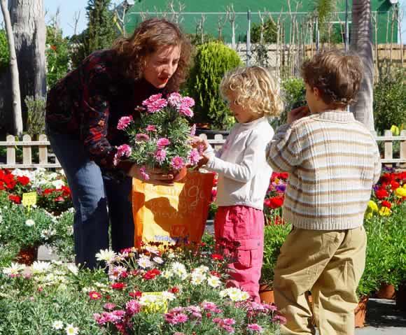 Vivers albogarden vivers albogarden - Jardineria en valencia ...