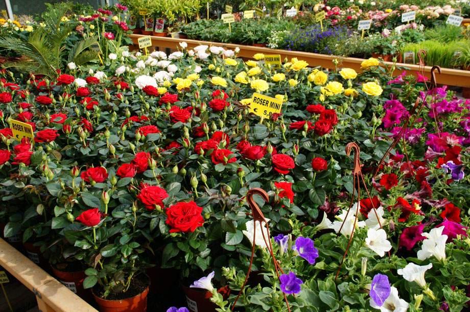 plantas de exterior vivers albogarden