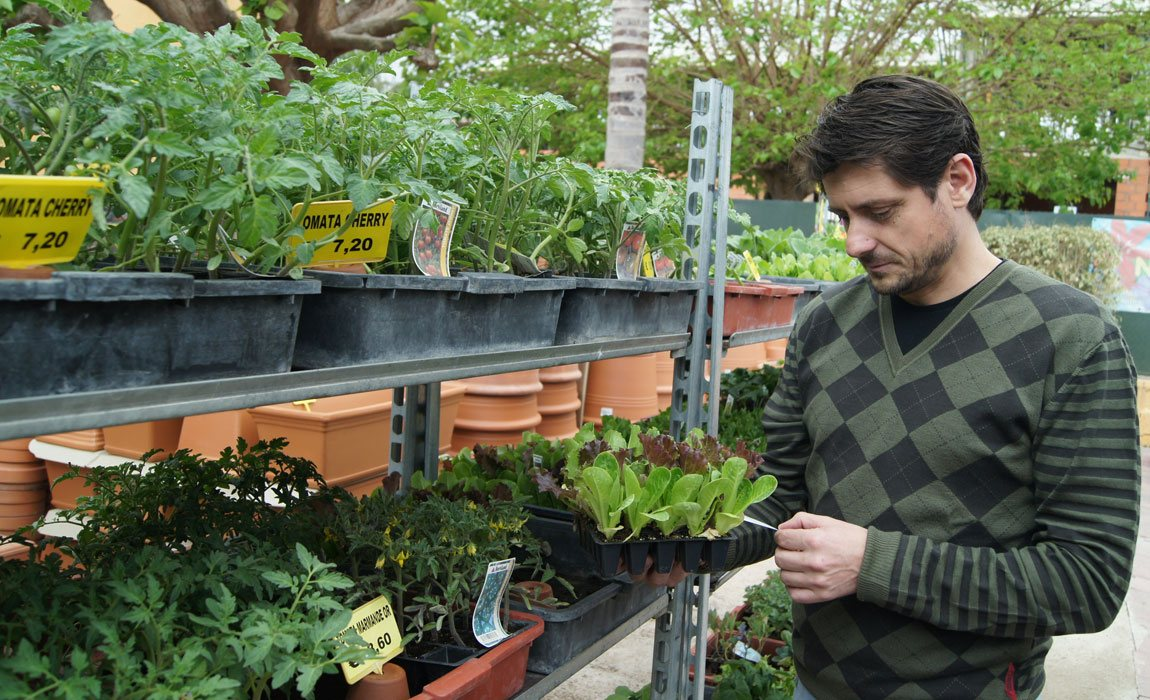 Planteles de hortalizas en Valencia