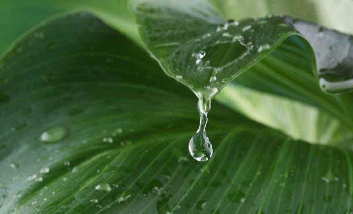Como se deben regar las plantas