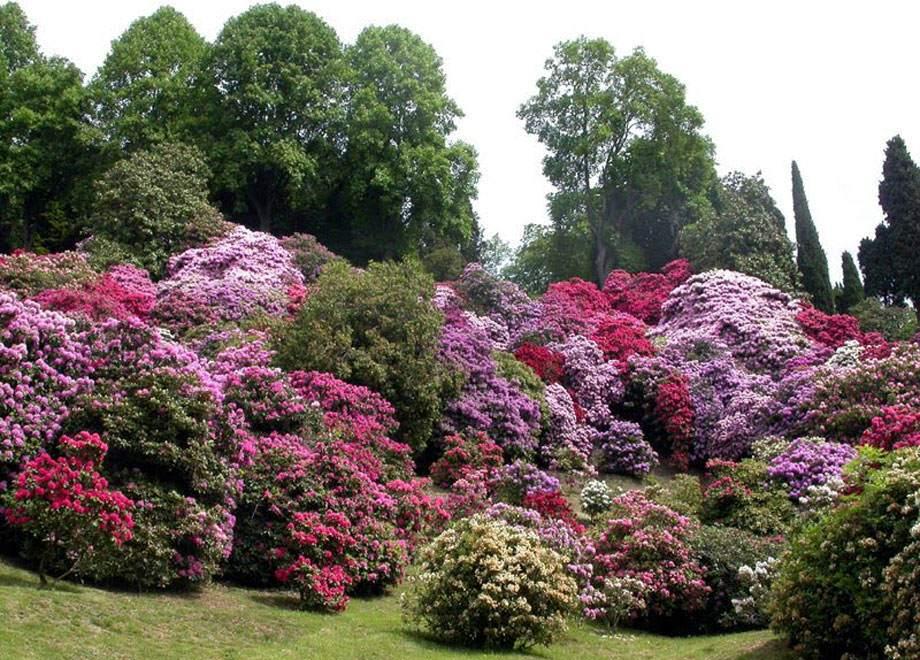 Jardín de Rhododendros