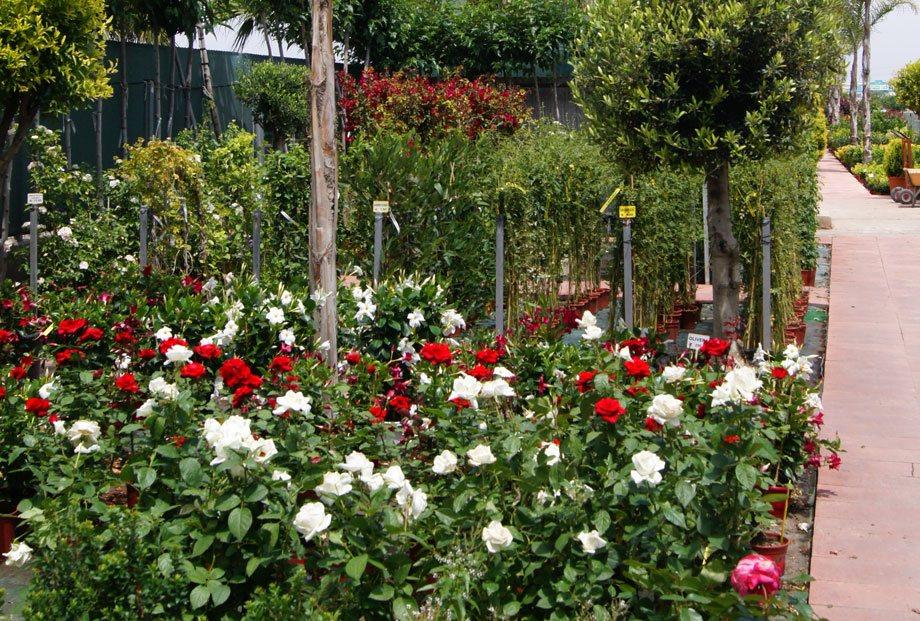 Rosales arbustivos